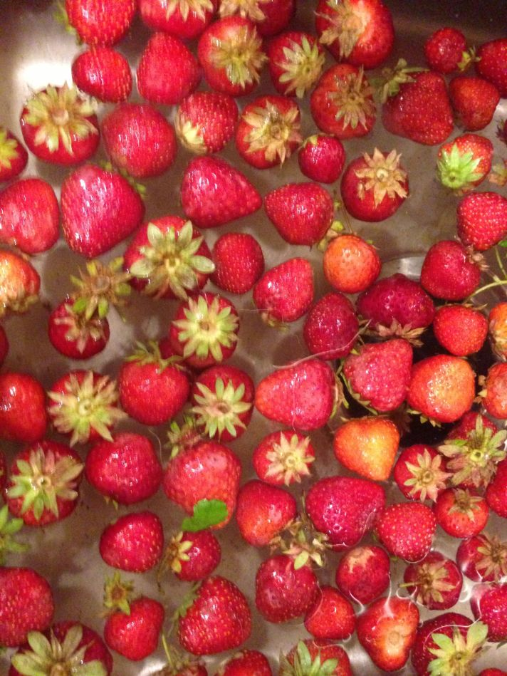 Strawberries, Fruitsert, Dessert, Perfect Fruit, Anti-Driscoll RobertDeutsch